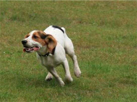 Zwartrijdende-hond